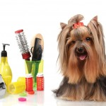 Curs Coafor Canin Slatina Pitesti Alexandria