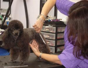romeo-getting-groomed2